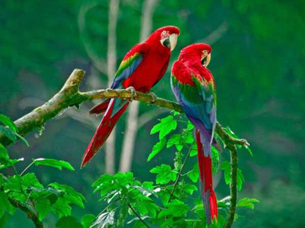 Mơ thấy chim là điềm dữ hay lành - Đánh con số nào chắc ăn nhất?