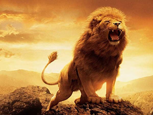 Mơ thấy sư tử đánh đề con gì, điềm báo tốt hay xấu?