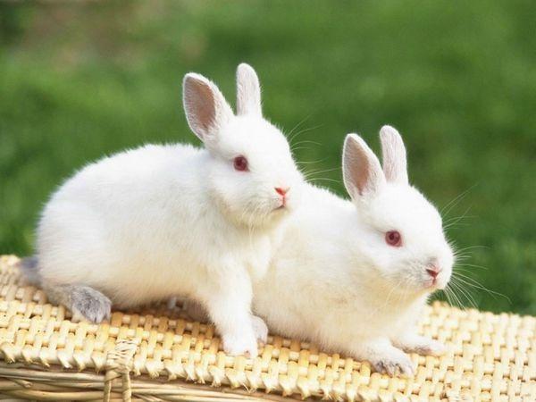 Mơ thấy con thỏ là điềm gì, ghi con lô nào dễ trúng?