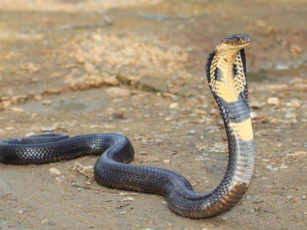 Mơ thấy rắn đuổi đánh gì phát tài – Rắn có phải điềm xấu?