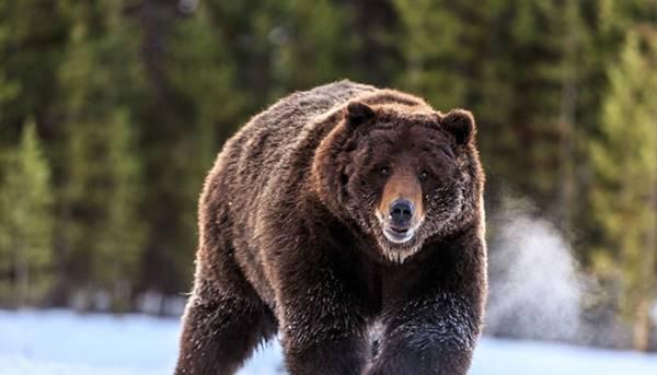 Nằm mơ thấy gấu đánh con gì đánh số mấy