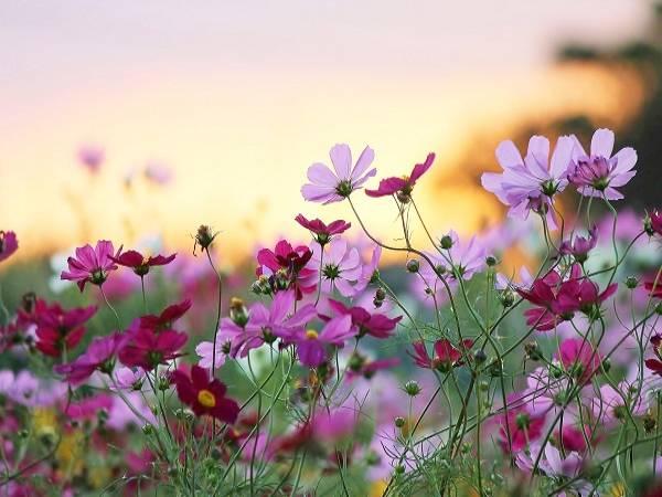 Ngủ mơ thấy hoa là điềm hên hay xui ? Đánh đề số mấy chắc trúng ?