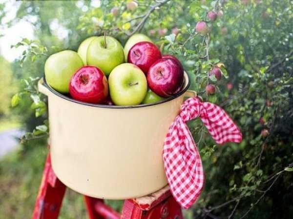 Ngủ mơ thấy quả táo là điềm hên hay xui ? Đánh số đề con gì ?
