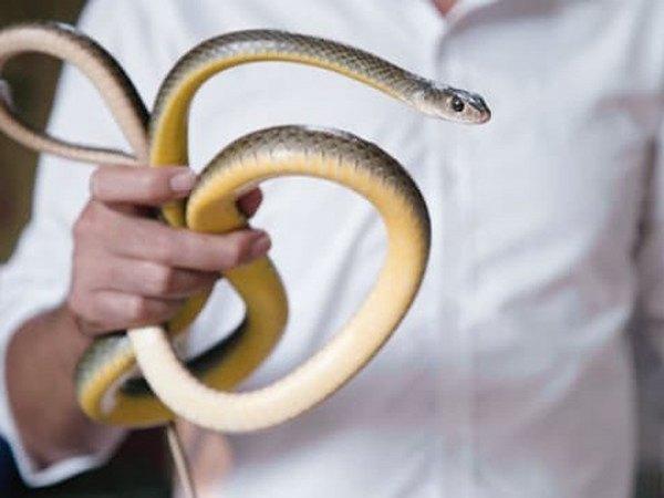 Ngủ mơ thấy bắt được rắn là điềm báo gì? Đánh số mấy trúng ?