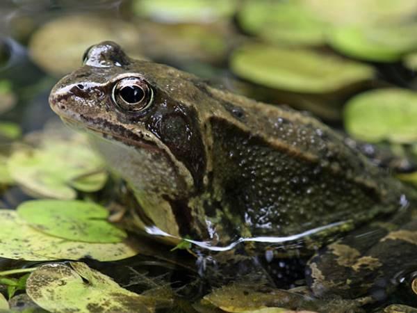 Nằm mơ thấy con ếch đánh con gì? Giải mã điềm báo giấc mơ