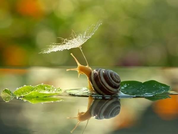 Điềm báo giấc mơ thấy con ốc sên đánh con gì số mấy